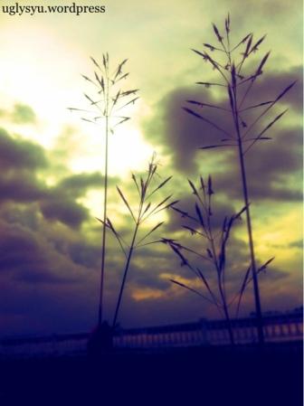 20111205-030801.jpg